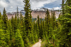 Trail by the trees in Peyton Lake area Stock Image