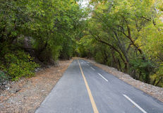 Trail through Trees in Provo Canyon Royalty Free Stock Photos