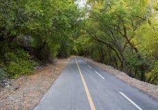Trail through Trees in Provo Canyon Royalty Free Stock Photos