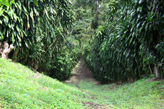 Trail in a tropical forest Stock Photography