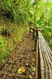 Trail in tropical forest with wooden fence. A wooden fence along side a tropical trainforest trail Royalty Free Stock Photo