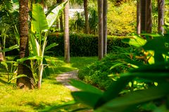 Trail in the tropical jungle in the afternoon. Tropic in the park. Stone road in forest Stock Photos