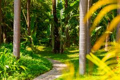 Trail in the tropical jungle in the afternoon. Tropic in the park. Stone road in forest Royalty Free Stock Image