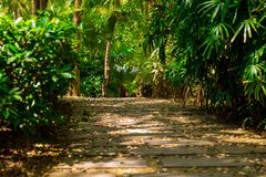 Trail in the tropical jungle in the afternoon. Tropic in the park. Stone road in forest Royalty Free Stock Images