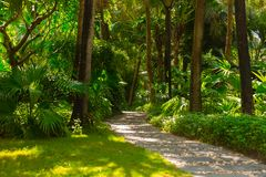 Trail in the tropical jungle in the afternoon. Tropic in the park. Stone road in forest Royalty Free Stock Photo