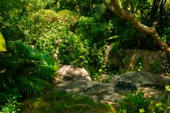 Trail in the tropical jungle in the afternoon. Tropic in the park. Stone road in forest Stock Photography