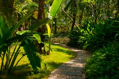 Trail in the tropical jungle in the afternoon. Tropic in the park. Stone road in forest Royalty Free Stock Photography