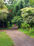 Trail in a tropical park. A couple takes a walk on trail in a park like setting leading to Twin Falls in Maui Hawaii Stock Images