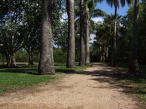 Trail through a tropical park. Trail through tropical park in north Queensland Stock Photos
