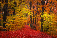 Trail trough a autumn forest with fog Royalty Free Stock Photos