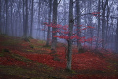 Trail trough a autumn forest with fog Royalty Free Stock Photography