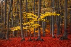 Trail trough a autumn forest with fog Stock Photos
