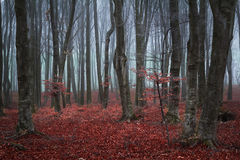 Trail trough a autumn forest with fog Stock Images