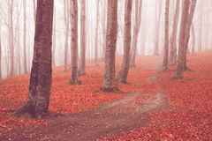 Trail trough a autumn forest with fog Stock Image