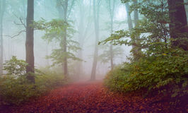 Trail trough a autumn forest with fog Royalty Free Stock Image