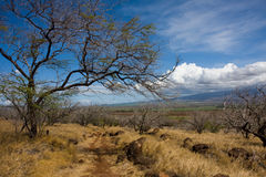 A trail under the hot Hawaiian sun. Hiking on the lahaina pali trail, Maui, Hawaii, under a bright sunny day. View of the Haleakala Volcano in the background stock photos