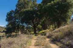 Trail Under Oak Tree Stock Photography