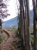 trail USA för fjädrar för berg för colorado fallmanitou Royaltyfria Foton