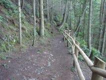 trail USA för fjädrar för berg för colorado fallmanitou Arkivfoto