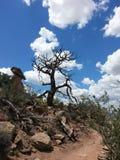 trail USA för fjädrar för berg för colorado fallmanitou Arkivbilder