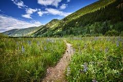 trail USA för fjädrar för berg för colorado fallmanitou Royaltyfri Bild
