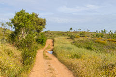 Trail in Vale Seco,  Santiago do Cacem. Alentejo, Portugal Royalty Free Stock Images