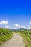 Trail through vineyard landscape Stock Photo