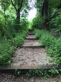 Trail walking. Stairs royalty free stock image