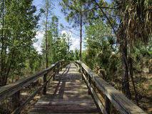 Trail Walkway Royalty Free Stock Photo