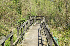 Trail or walkway in the swamp Royalty Free Stock Images