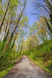 Trail way in a forest Stock Photography