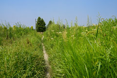 Trail in weeds on sunny summer day Royalty Free Stock Images