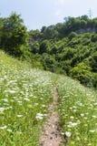 Trail among white wild flowers leading to pod Kamiko  in the  Iskarsko gorge, Bulgaria Royalty Free Stock Photo