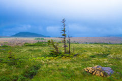 Trail in the wilderness. A trail through beautiful wilderness in Newfoundland, Canada Royalty Free Stock Images