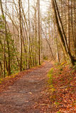 Trail into the Wilderness Royalty Free Stock Photography