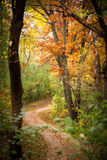 Trail winding through a forest of autumn foliage in Minnesota. A hiking trail winds through a forest of yellow, orange, and green autumn foliage in a park of Royalty Free Stock Photos