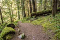 Trail Winds Through Thick Oregon Forest. Covered in moss Royalty Free Stock Photo
