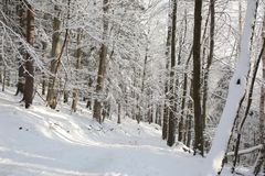 Forest path in winter scenery stock photo