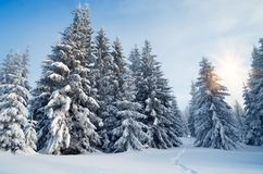 Trail in the winter forest Royalty Free Stock Photos