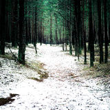 Trail in the winter pine tree forest - instant vintage film effe Royalty Free Stock Images