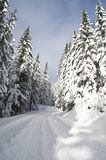 Trail through winter woods Royalty Free Stock Image