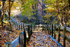 Trail into the wood. S in the fall Royalty Free Stock Photography
