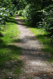 Trail Through Wooded Area Stock Image