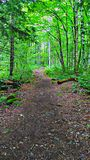 Trail. In woods royalty free stock photo