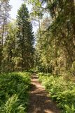 Trail in the woods in beautiful spring landscape. Walking path in the mixed forest. Trail in the woods in beautiful spring landscape. Walking path in the mixed royalty free stock photography