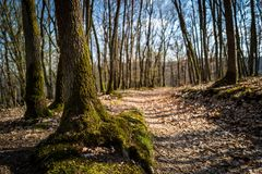 A traIl in the woods of Boppard stock image