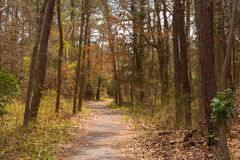 A Trail in the Woods Royalty Free Stock Images
