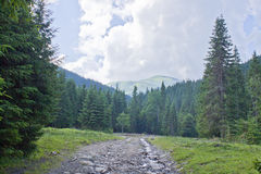 The trail in the woods. The trail in the forest on the background of mountains and clouds Royalty Free Stock Images