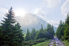 The trail in the woods. The trail in the forest on the background of mountains and clouds Stock Images