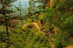 Trail In The Woods Royalty Free Stock Photography